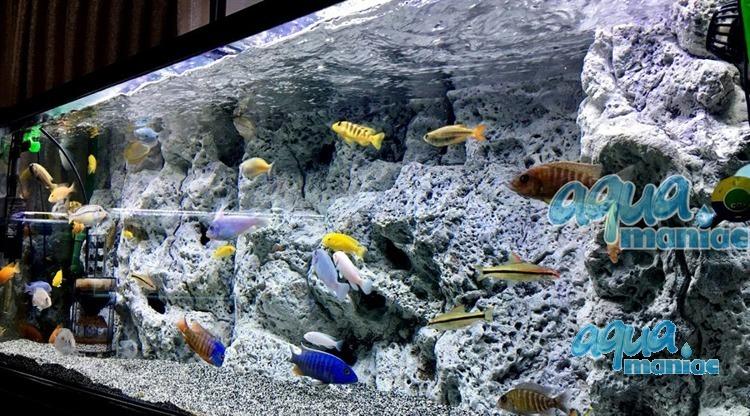 Limestone 3d background to fit 5x2 foot aquarium 150x60 fish tank - 3d ruckwand aquarium 150x60 ...
