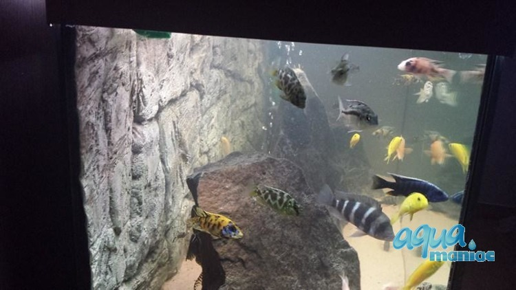 3D Background Thin Grey Rock 97x45cm to fit Aqua Oak 110 Aquarium