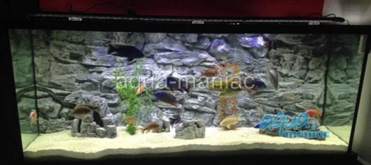 3D grey rock background 146x45cm