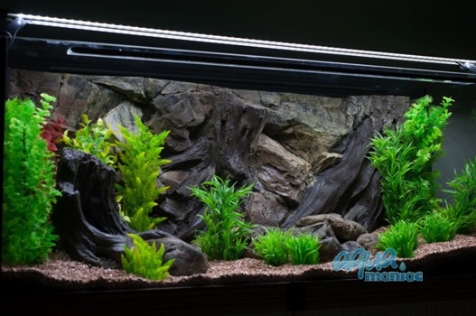 3D root background 77x36cm