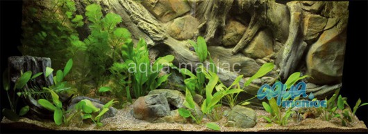Fluval Roma 200 3D amazon background 97x45cm in 2 sections
