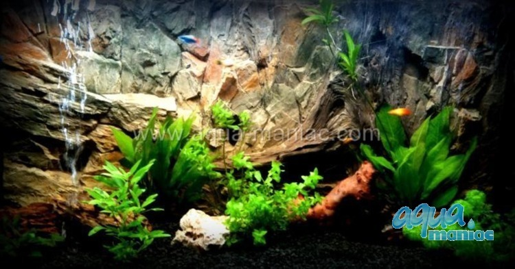 JUWEL Vision 260 3D Root and Root Background 117x54cm in 2 sections