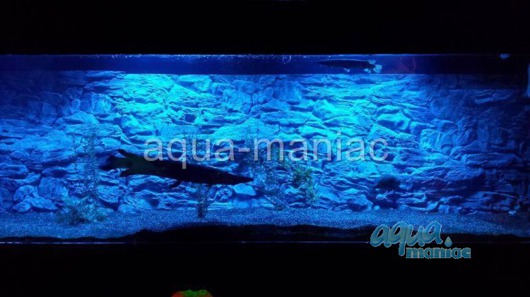 JUWEL Vision 400 3D thin rock background 147x53cm in 3 sections