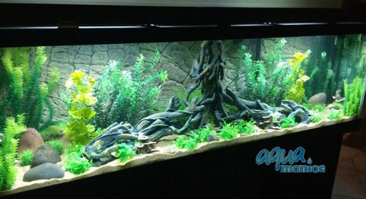 JUWEL Vision 450 3D Root Background 148x56cm in 3 sections