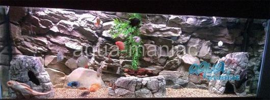 Large grey aquarium rock