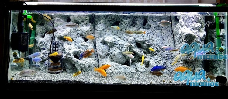 Modules of Limestone Background to fit 180X50cm aquarium