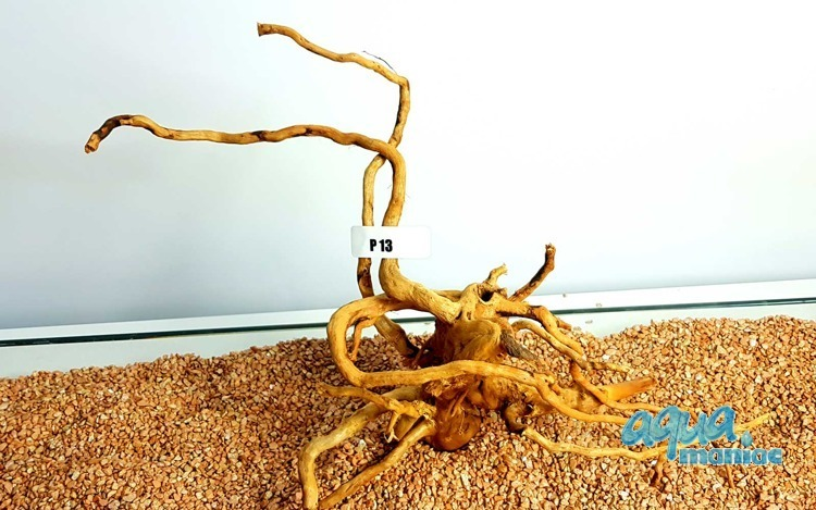 Red Moore Root size 21x42cm