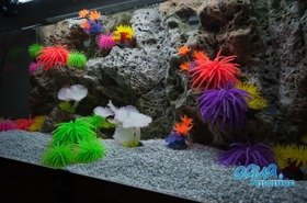 Modules of Limestone Background with corals to fit 80x40cm aquarium